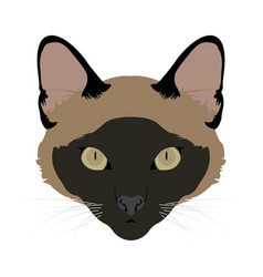 isolated cat avatar vector image vector image