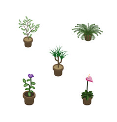 isometric houseplant set of fern plant grower vector image vector image