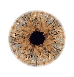 Eye iris vector
