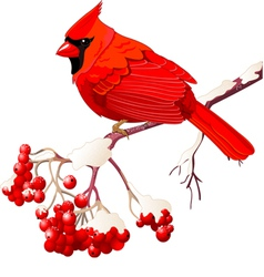 Red cardinal bird vector