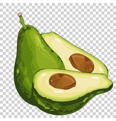Avocado isolated organic food farm food vector