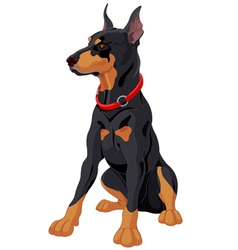 Doberman vector