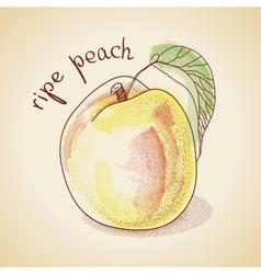 vintage peach vector image