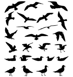 gulls silhouette vector image vector image