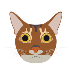 isolated abyssinian cat vector image vector image