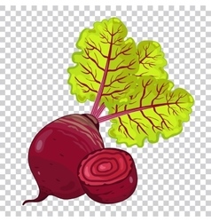 Beet isolated organic food farm food vector
