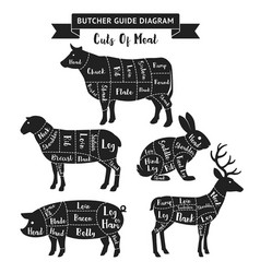Butcher guide cuts of meat diagram vector