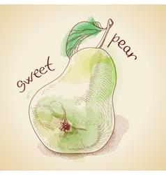 Vintage pear vector