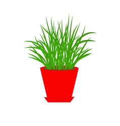 Grass in red flower pot growing icon isolated vector