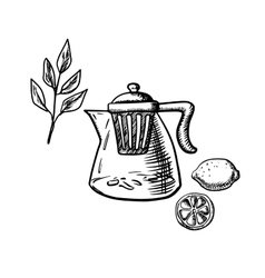 Teapot with infuser tea leaf and lemon fruit vector