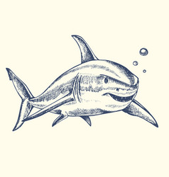 hand drawn shark vector image vector image