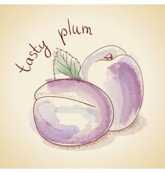 vintage plum vector image