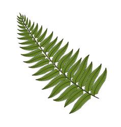 color image fern leaf vector image vector image