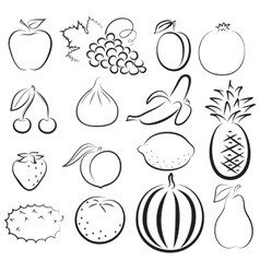 sketch of different fruits vector image vector image