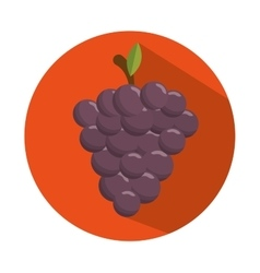 Tasty grape harvest juicy design con vector