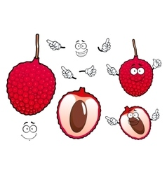 Bright red exotic lychee fruit vector