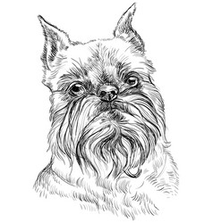 Brussels griffon dog portrait vector