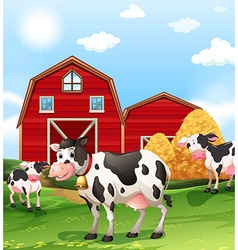 Cows in the farmland vector