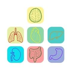 internal organs set vector image vector image