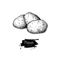 Potato drawing Isolated potatoes heap vector image vector image