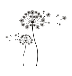 silhouette flying blow dandelion buds vector image vector image