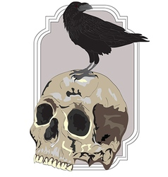 Black Raven Sitting on Skull vector image