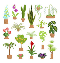 house plants and flowers vector image