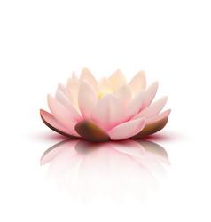 3d flower of lotus vector