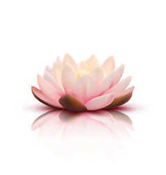 3d flower of lotus vector