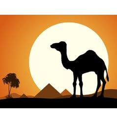 Camel in Desert vector image vector image