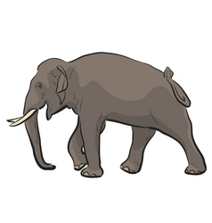 Asian elephant vector