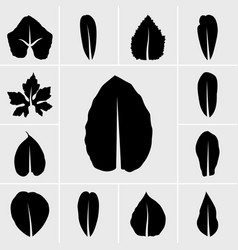 Icons leaf vector