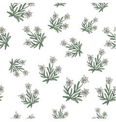 Edelweiss seamless pattern vector