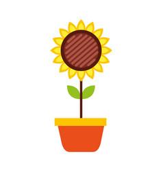 potted sunflower natural plant petal decoration vector image