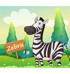 A zebra beside a signboard vector image