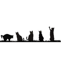 Black cats playing outdoor vector image