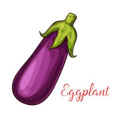 eggplant sketch vegetable icon vector image vector image