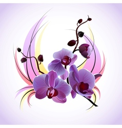 greeting card with orchids vector image vector image