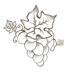 Grape Branch vector image