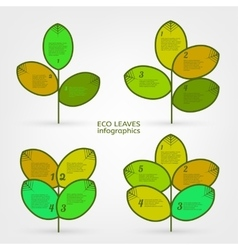 Leaves infographic vector