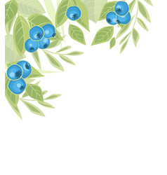background of blueberries fruit vector image vector image