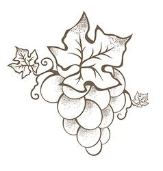 Grape Branch vector image vector image