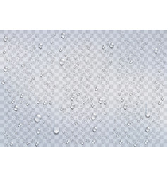 realistic rain drops on the transparent background vector image