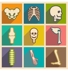 Set flat icons with long shadow human skeleton vector