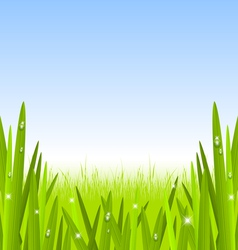 Morning grass copyspace vector