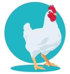 broiler chicken Cock vector image