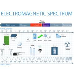 Electromagnetic spectrum vector image