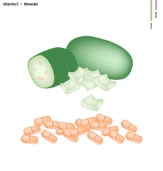 Wax gourd with vitamin c and minerals vector
