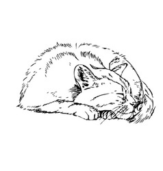 sleeping cat vector image