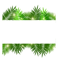 Leaves of palm tree on white background vector